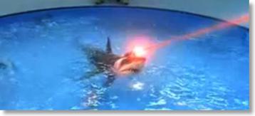 shark laser pointer safety statistics laws and general laser